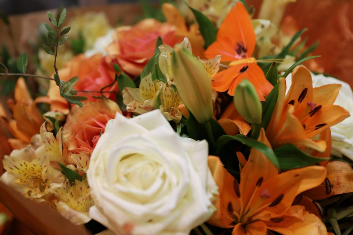 Rose-Orange-0418-030.JPG