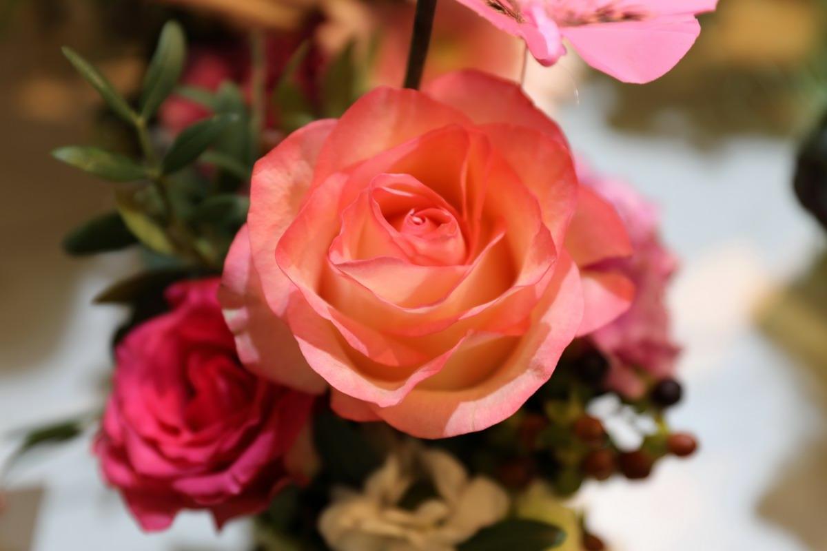 Rose-Orange-0418-041.JPG