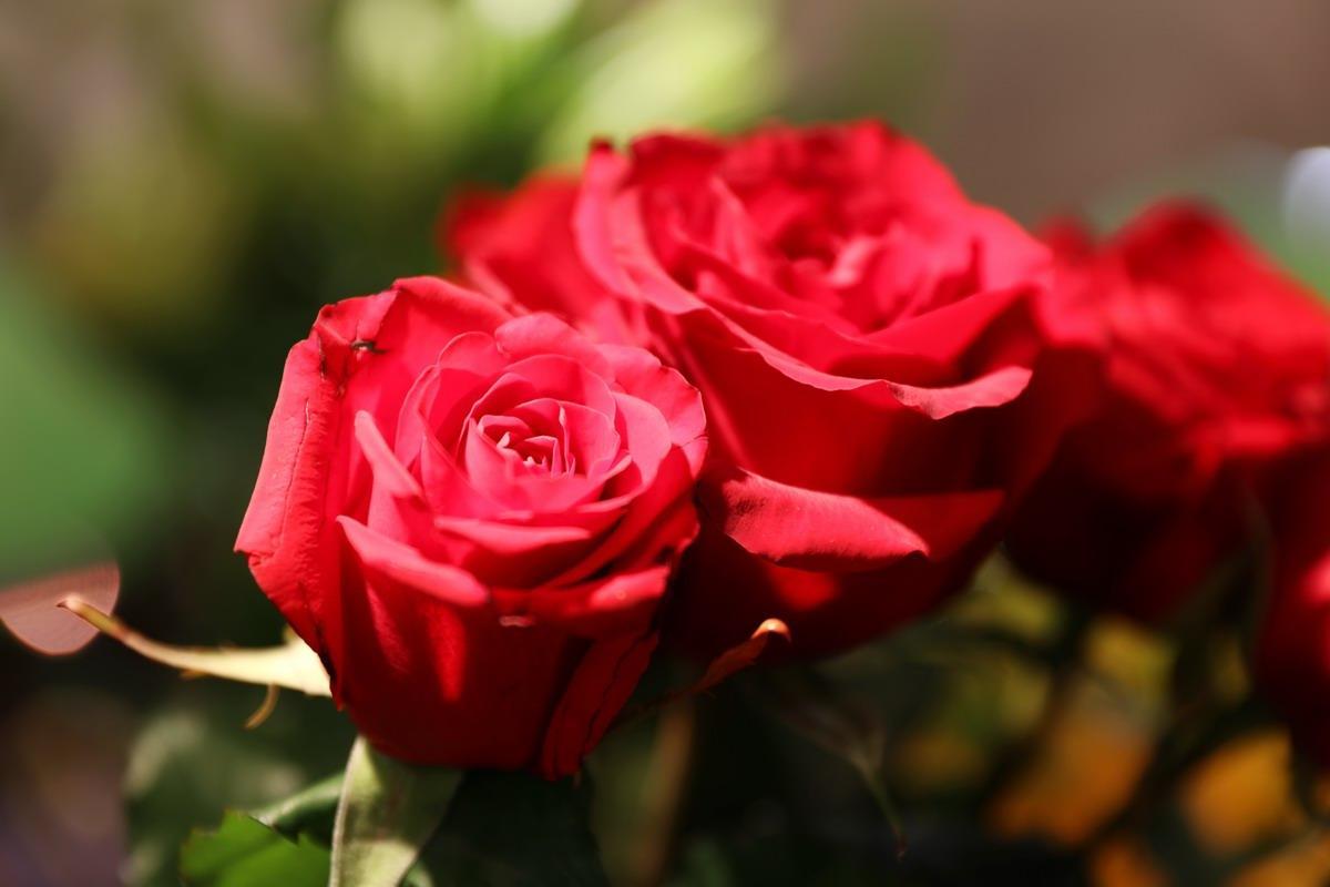 Rose-Orange-0418-047.JPG
