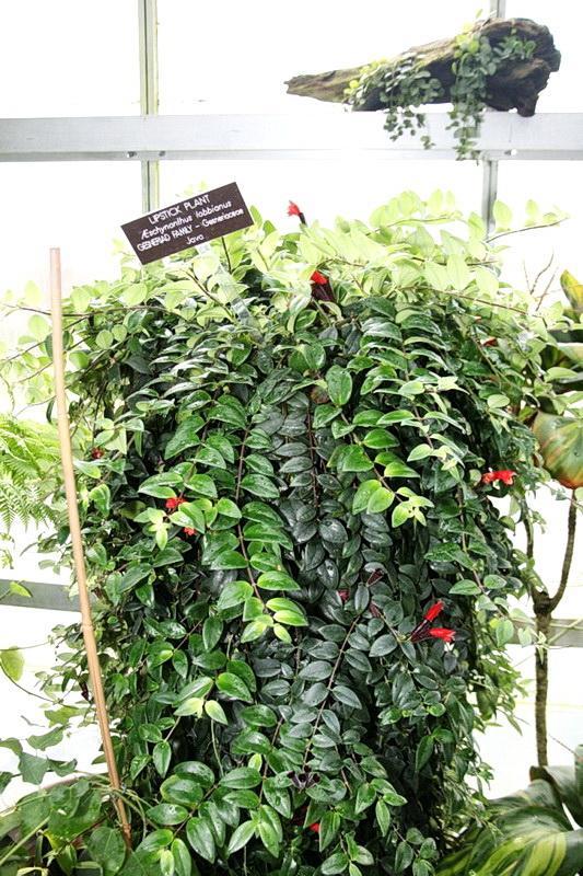 Plantes vertes for Plantes vertes