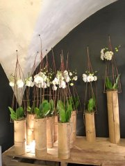 Orchidee_01.jpg
