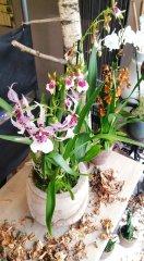 Orchidee_02.jpg