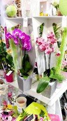 Orchidee_03.jpg