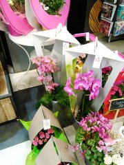 Orchidee_04.jpg
