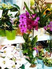 Orchidee_05.jpg
