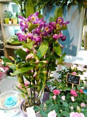 Orchidee_06.jpg