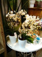 Orchidee_07.jpg