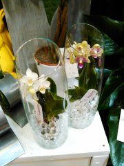 Orchidee_08.jpg