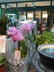 Orchidee_09.jpg