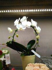 Orchidee_10.jpg