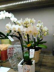 Orchidee_11.jpg