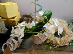 Orchidee_12.jpg