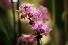 Orchidee_14.jpg