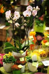 Orchidee_15.jpg