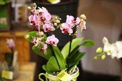 Orchidee_16.jpg