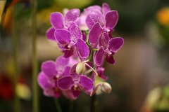 Orchidee_17.jpg