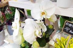 Orchidee_18.jpg