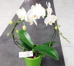 Orchidee_19.jpg