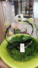 Orchidee_20.jpg