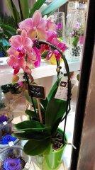 Orchidee_21.jpg
