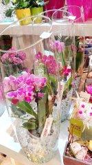 Orchidee_22.jpg