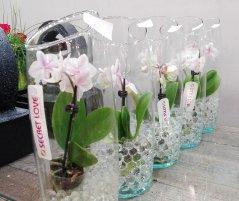 Orchidee_24.jpg
