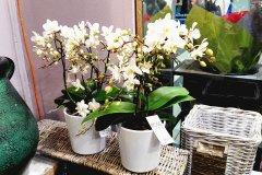 Orchidee_25.jpg