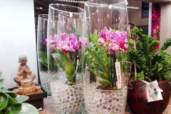Orchidee_26.jpg