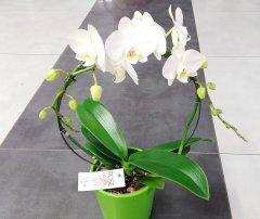 Orchidee_27.jpg