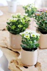 Plante_fleurie_01.jpg