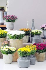 Plante_fleurie_02.jpg