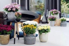 Plante_fleurie_04.jpg