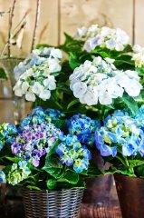 Plante_fleurie_05.jpg