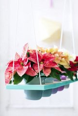 Plante_fleurie_07.jpg