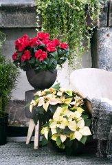Plante_fleurie_10.jpg