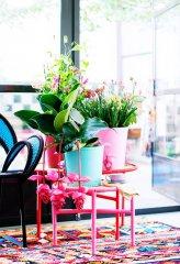 Plante_fleurie_12.jpg
