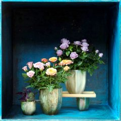 Plante_fleurie_13.jpg