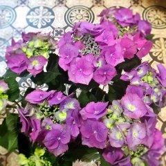 Plante_fleurie_14.jpg