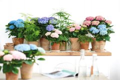 Plante_fleurie_16.jpg