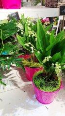 Plante_fleurie_18.jpg