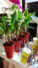Plante_fleurie_19.jpg