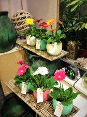 Plante_fleurie_20.jpg