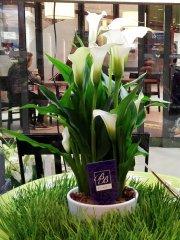 Plante_fleurie_23.jpg