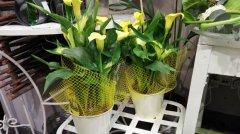Plante_fleurie_25.jpg