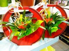 Plante_fleurie_28.jpg