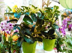 Plante_fleurie_29.jpg