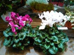 Plante_fleurie_30.jpg