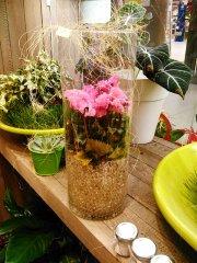 Plante_fleurie_31.jpg