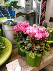 Plante_fleurie_32.jpg