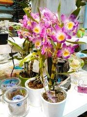 Plante_fleurie_33.jpg